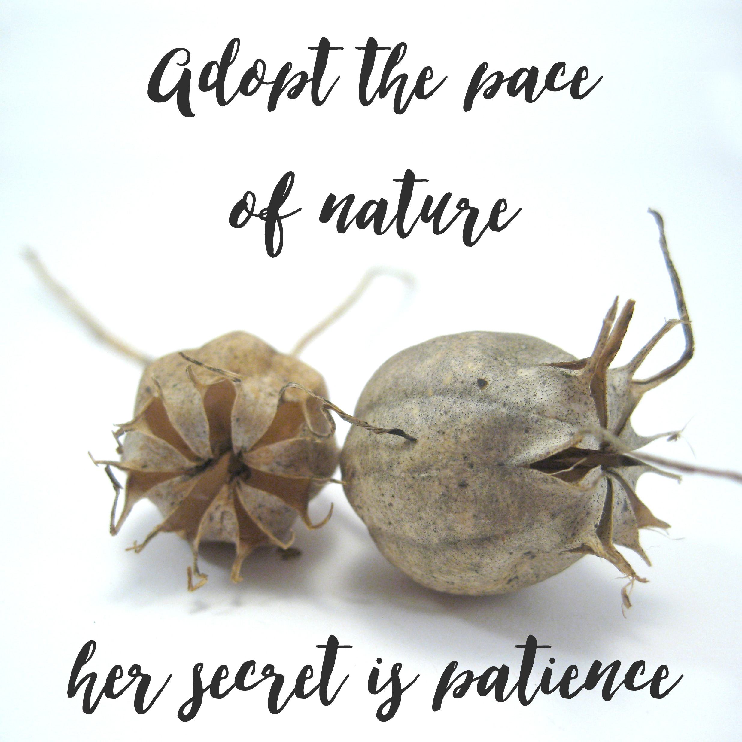 adopt the pace of nature her secret is patience Ralph Waldo Emerson